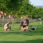 dog friendly holidays at old oaks