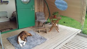 Dog friendly glamping old oaks