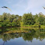 Old oaks' pond